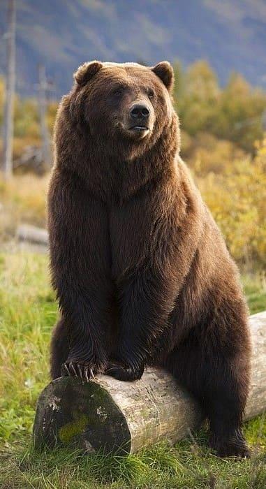 Bear Wallpaper For Iphone 7 Plus