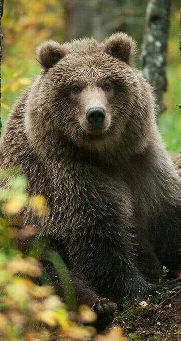 Bear Wallpaper For Iphone 7