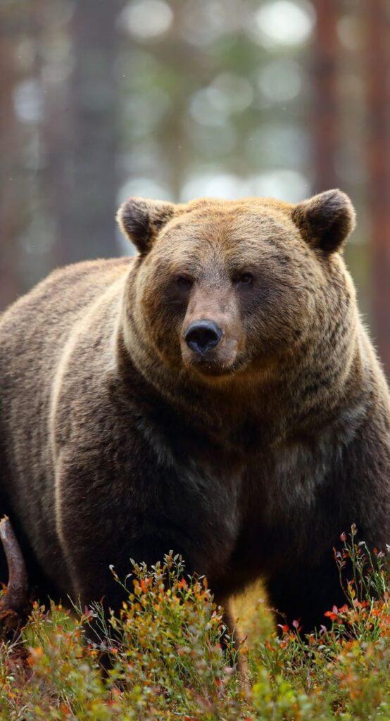 Bear Wallpaper For Iphone X