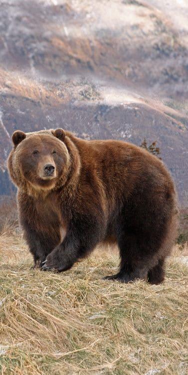 Bear Wallpaper For Iphone
