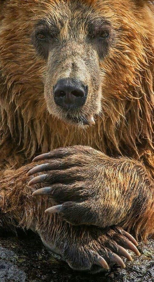Bear Iphone Wallpaper Hd