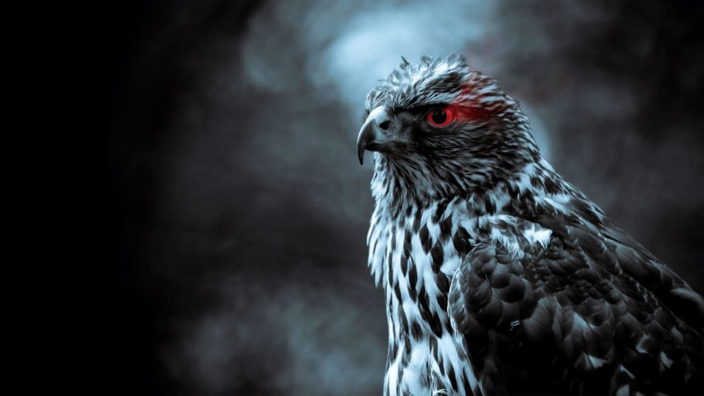 Best Eagle Computer Wallpapers