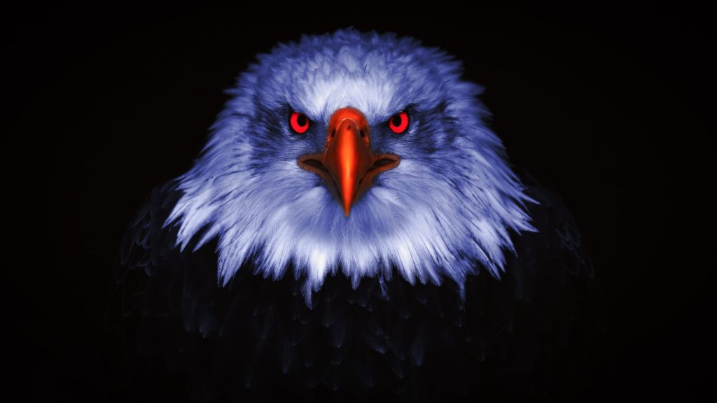 Eagle Pc Wallpapers