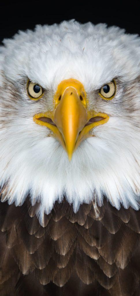 Eagle Picture