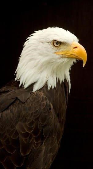 Eagle Wallpaper For Mobile Hd