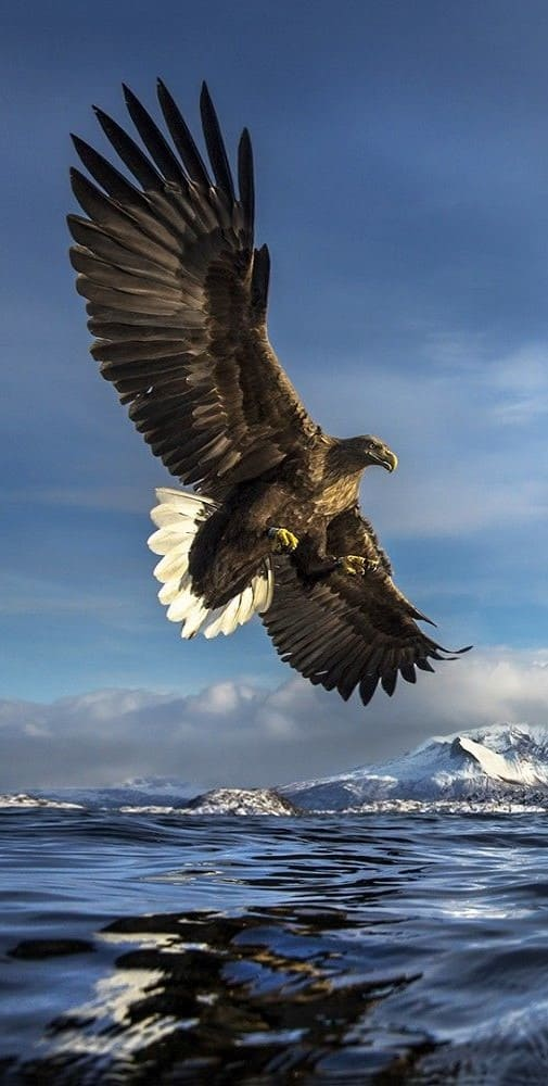 Eagle Wallpaper For Iphone