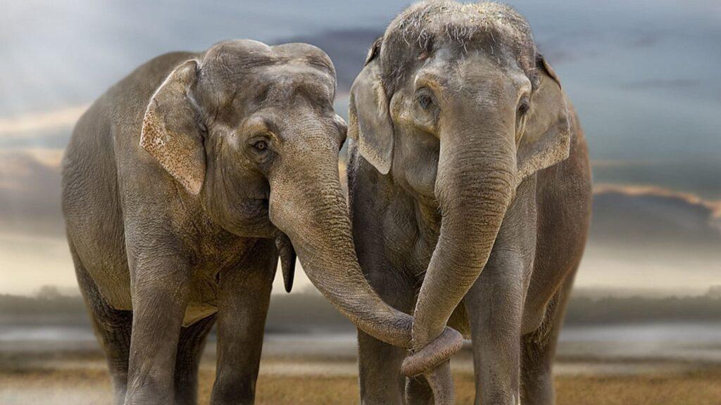 Elephant For Desktop Wallpaper 4k