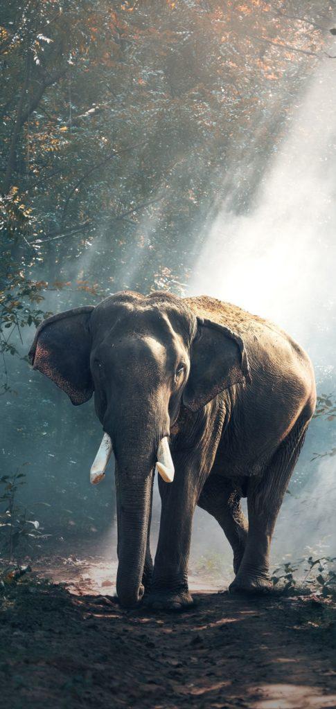 Elephant Wallpaper 2020