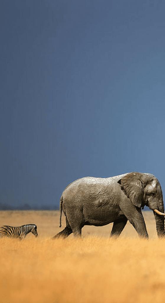 Elephant Wallpaper For Mobile