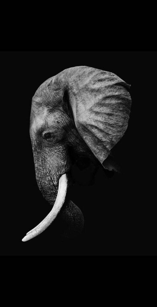 Elephant Wallpaper For Phone