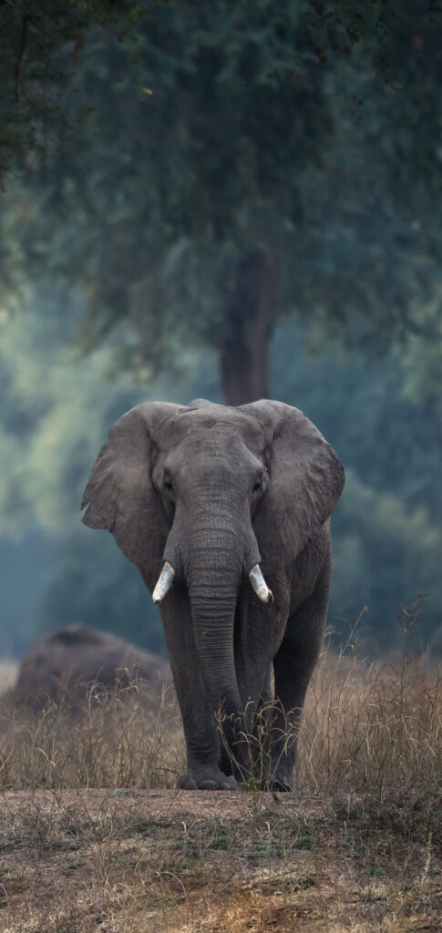 Elephant Wallpaper For Iphone 11 Max Pro