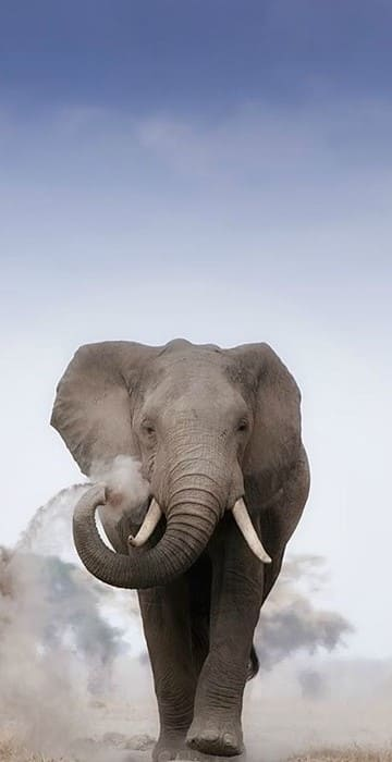 Elephant Wallpaper For Iphone 8 Plus