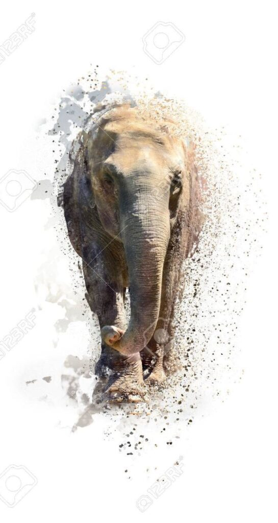 Elephant Wallpaper For Iphone Xr