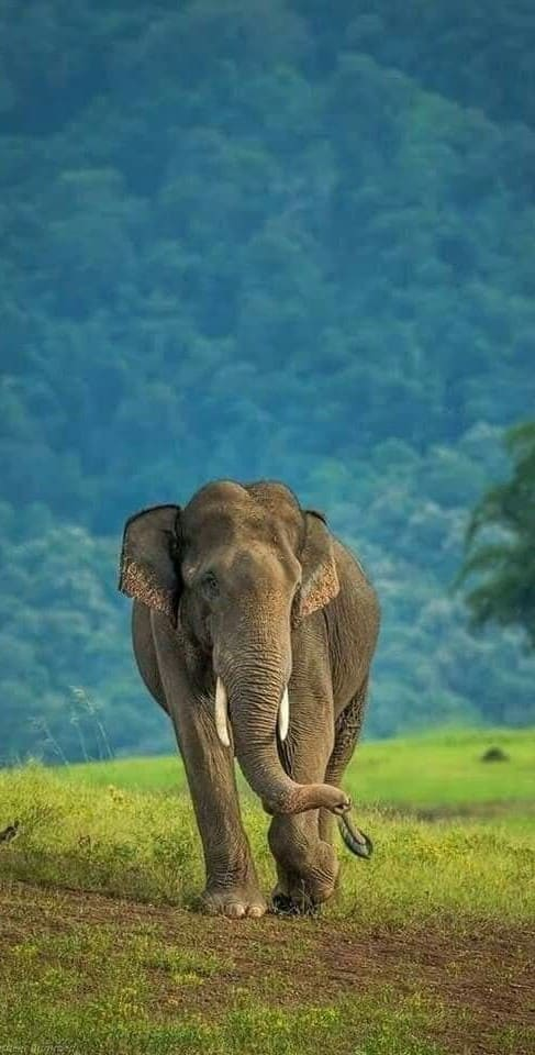 Elephant Wallpaper For Iphone Xs
