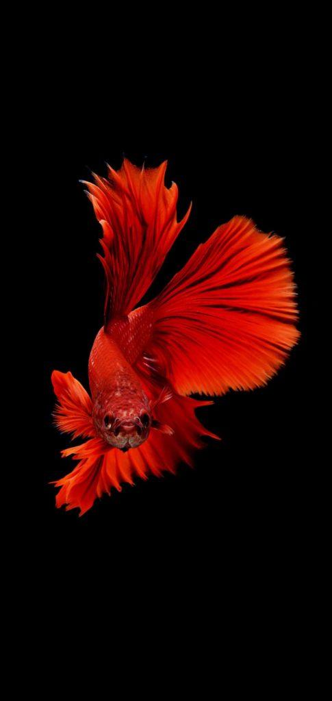 Fish Best Wallpaper