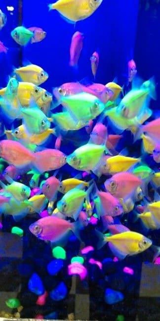 Fish Wallpaper For Phone