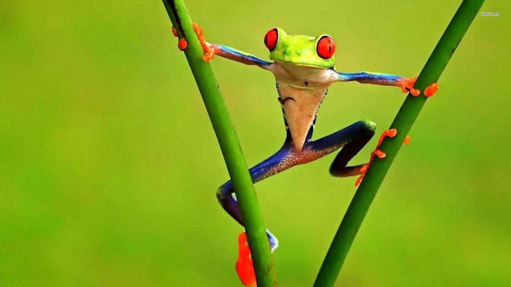 Frog Computer Wallpapers