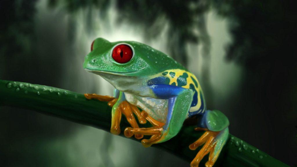 Frog Desktop Wallpaper
