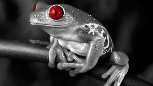Frog Laptop Wallpaper