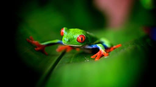 Frog Pc Wallpaper