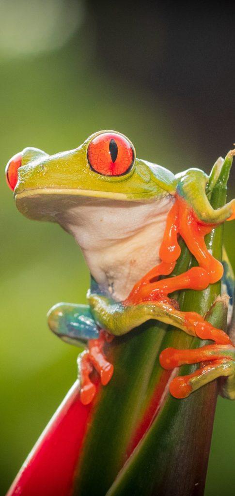 Frog Wallpaper Hd