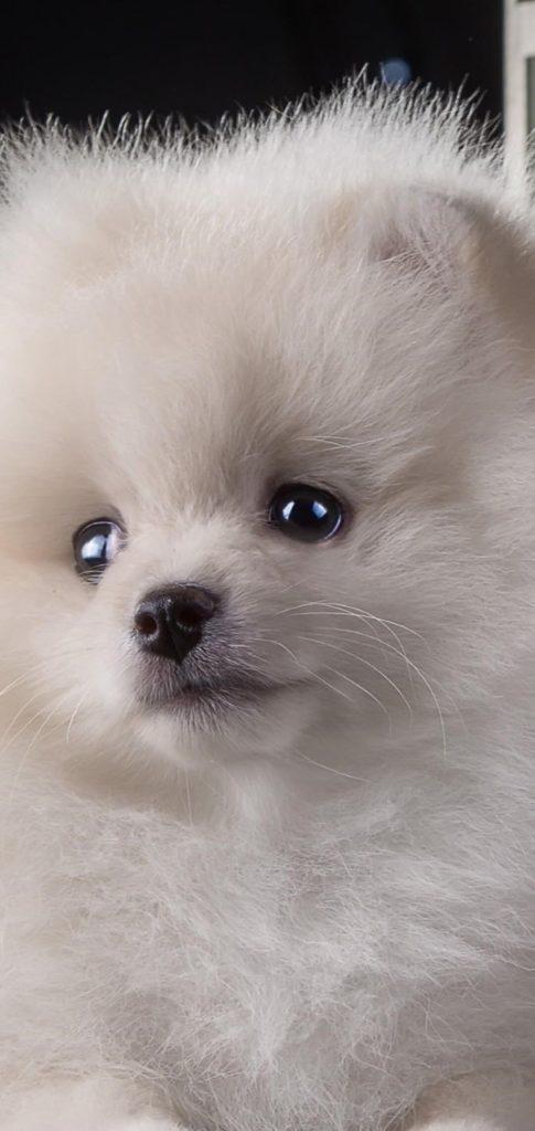 Puppy Best Wallpaper
