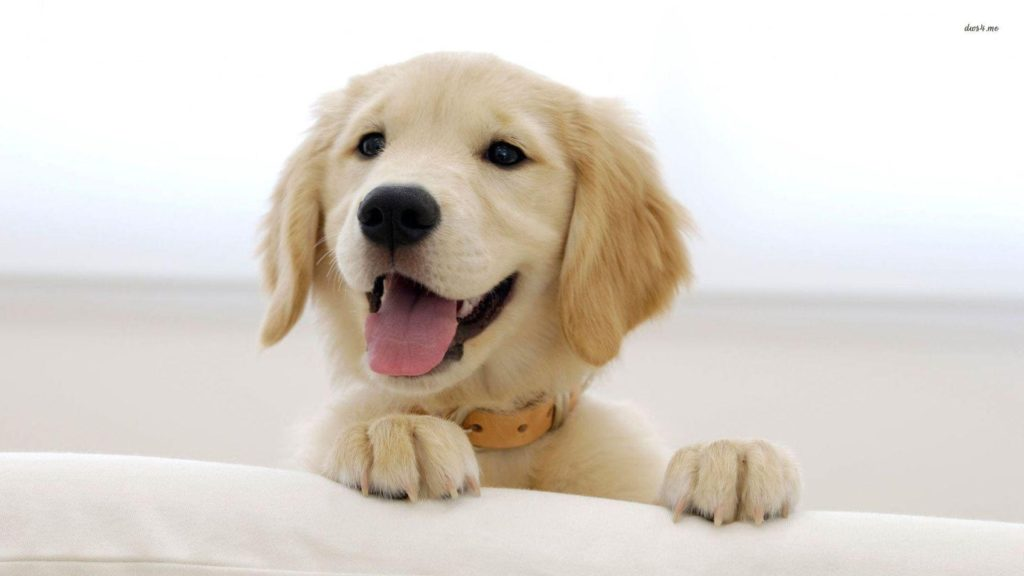 Puppy Pc Wallpaper