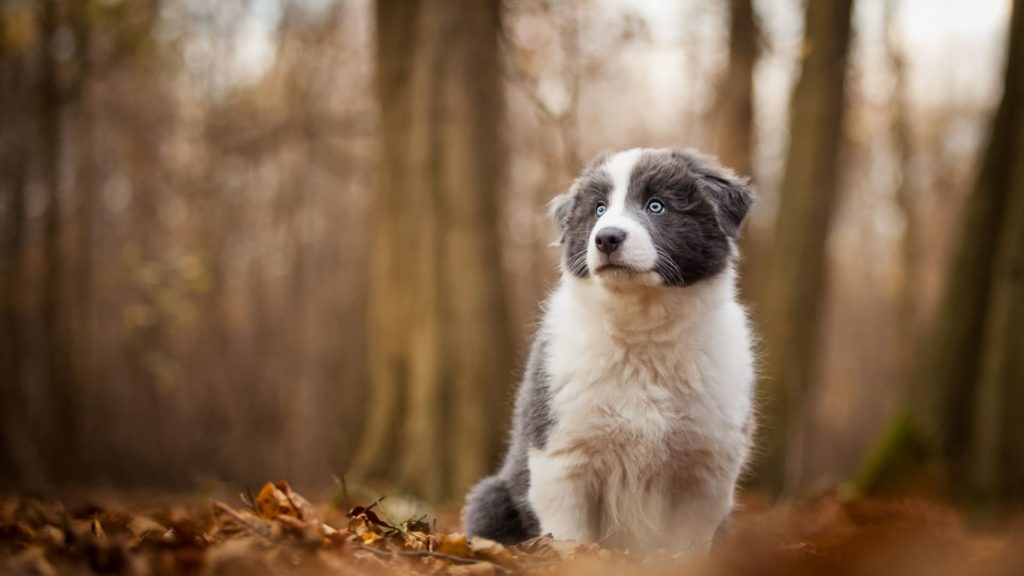 Puppy Pc Wallpapers