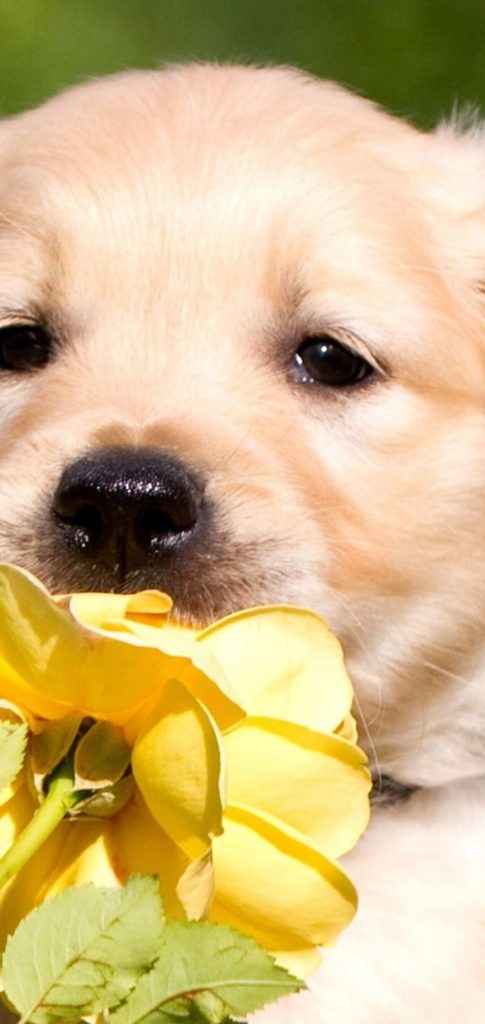 Puppy Wallpaper Android
