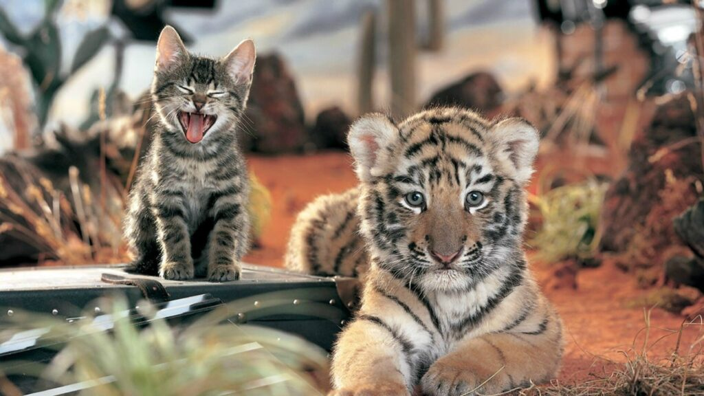 Tiger Laptop Wallpaper