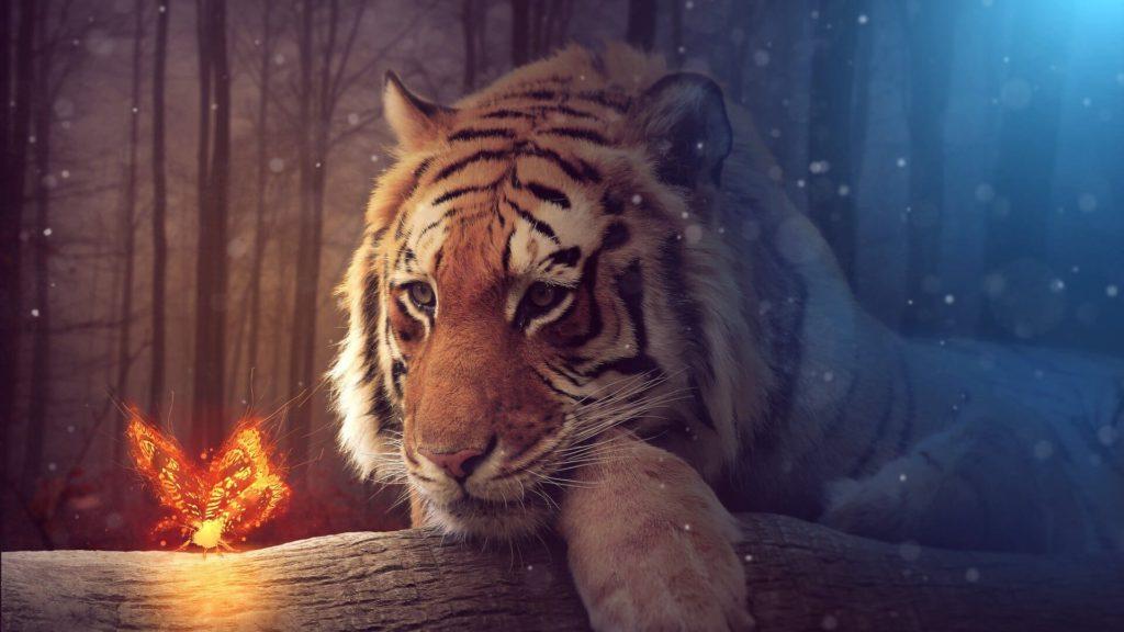 Tiger Laptop Wallpapers