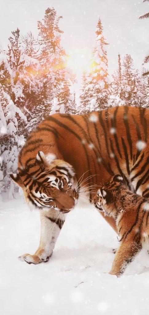 Tiger Wallpaper Phone