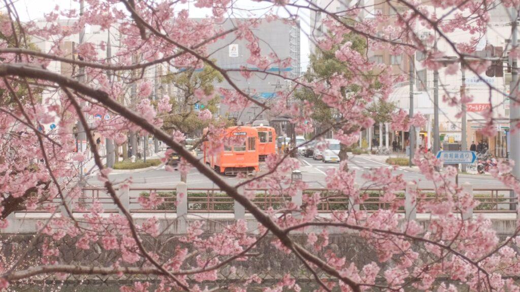 cherry blossom wallpaper 4k