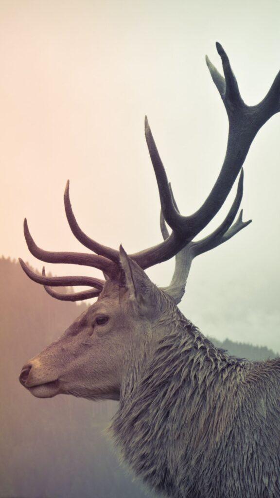 deer wallpaper 1080x1920