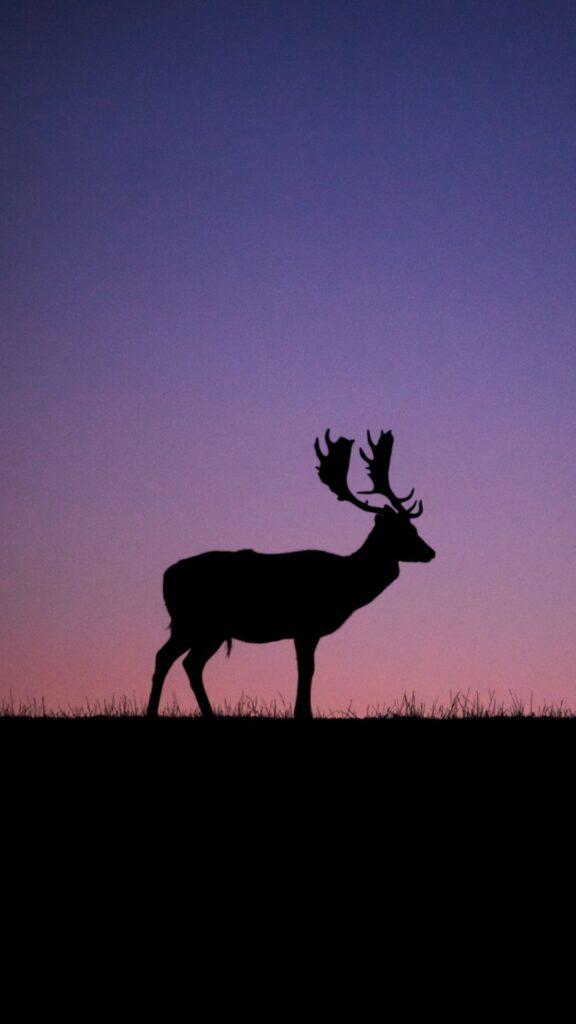 deer wallpaper hd