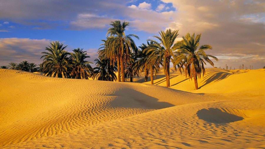 desert laptop background