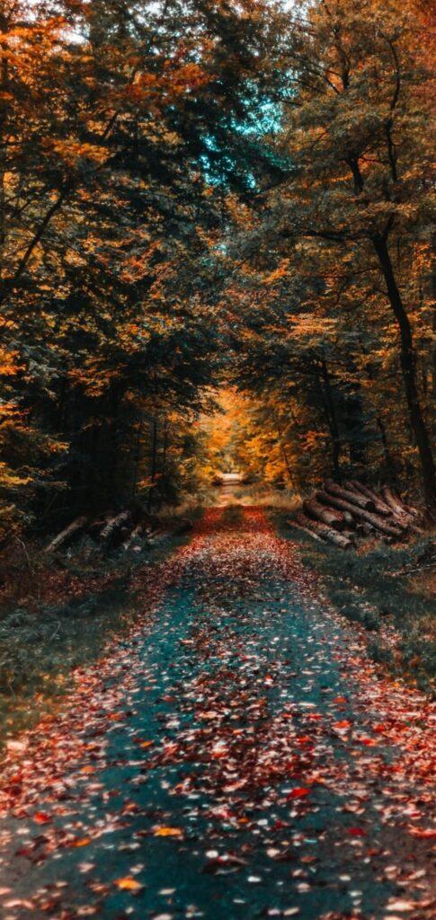 fall wallpaper 4k