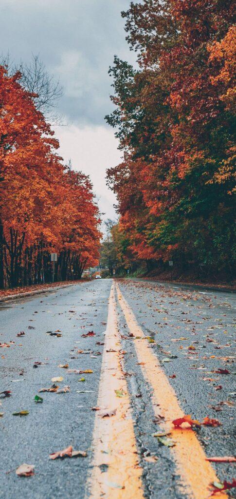 fall wallpaper 1080x1920