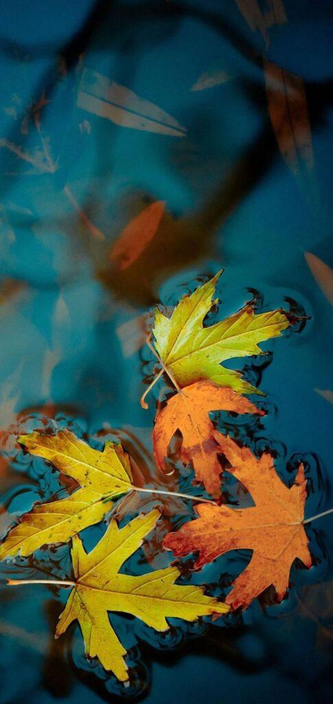 fall wallpaper download