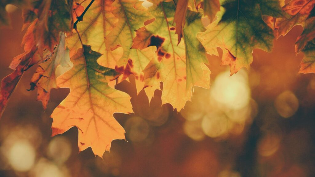 fall wallpaper for pc