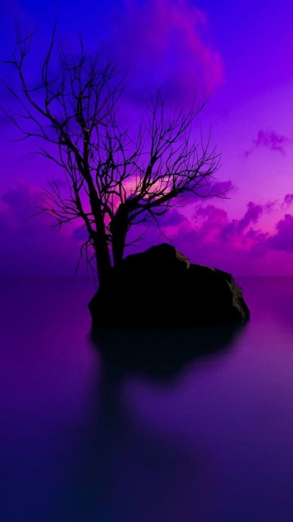 purple background photos