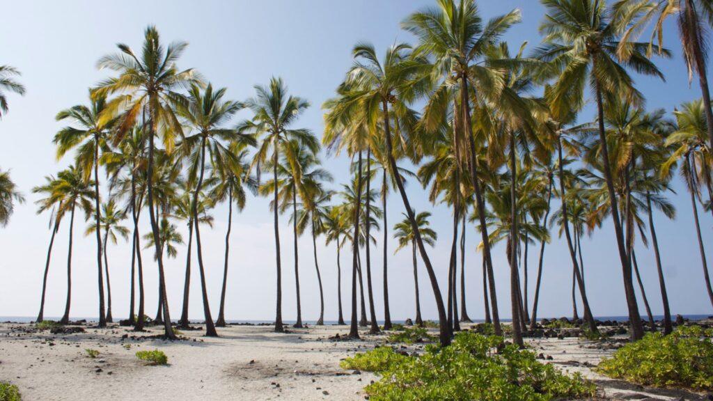hawaii backgrounds